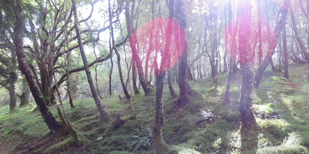 A sunlit woodland