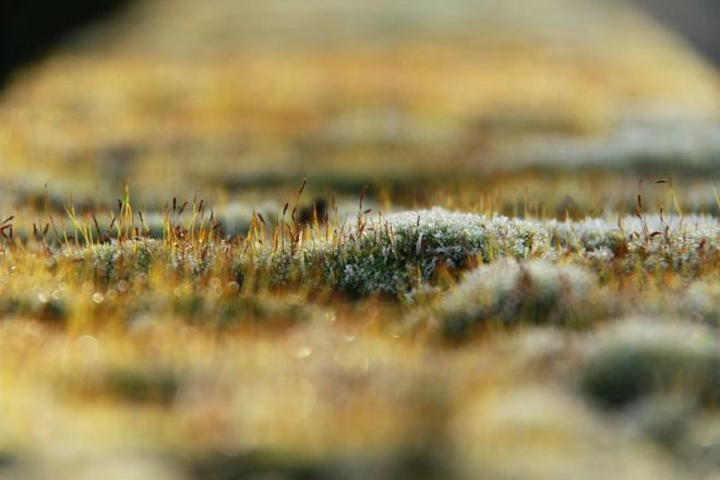 Frost-covered Moss © Cristian Bortes, Creative Commons Attribution-NonCommercial-ShareAlike 2.0 Generic license