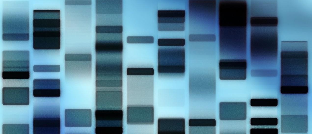 dna-fingerprint-1-1163530-1278x903 Flavio Takemoto freeimages crop