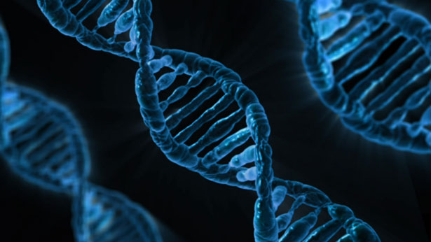 View of the structure of DNA by Виталий Смолыгин. License: Public Domain