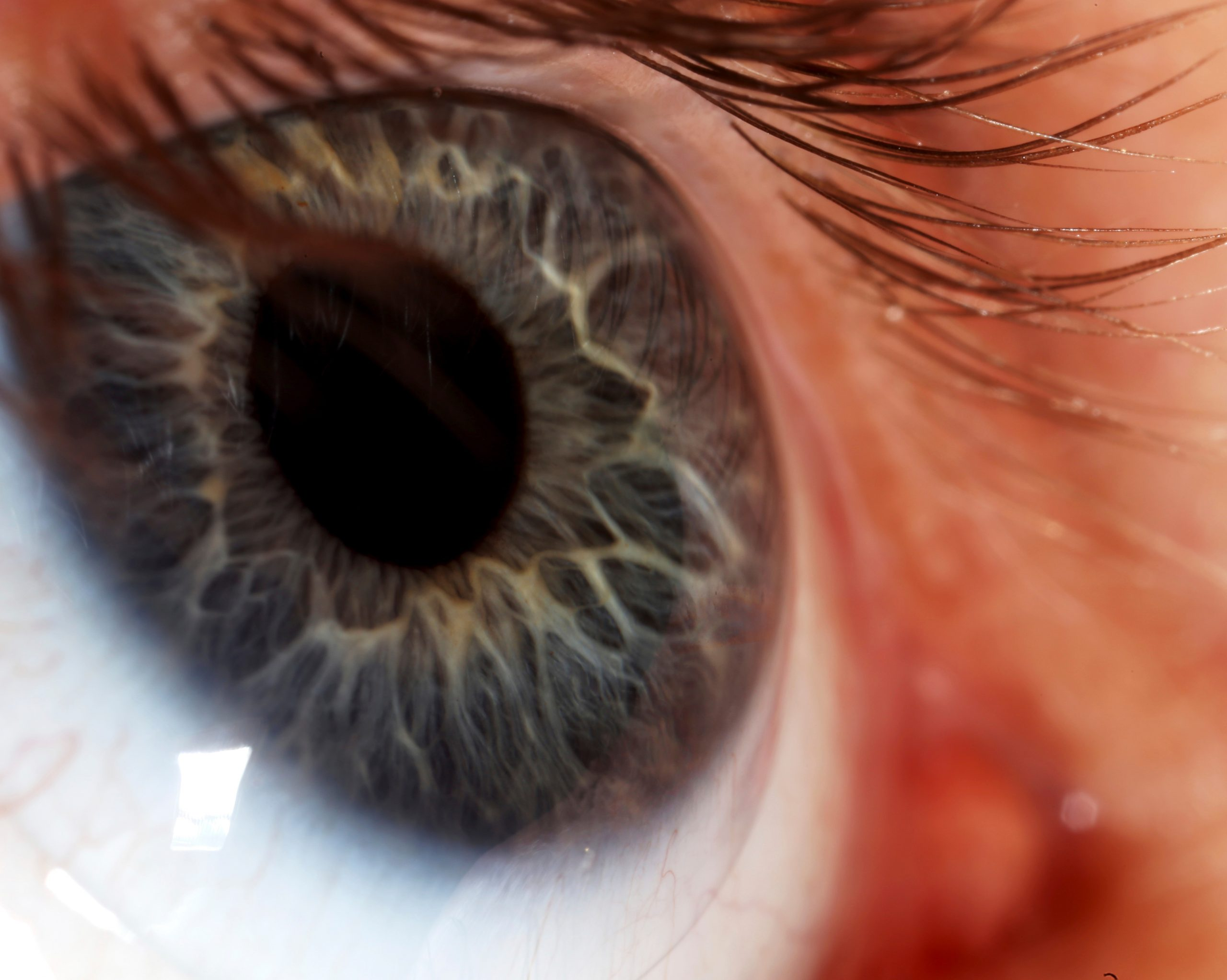 eye wellcome images cc by nc 4 credit macroscopic solutions crop