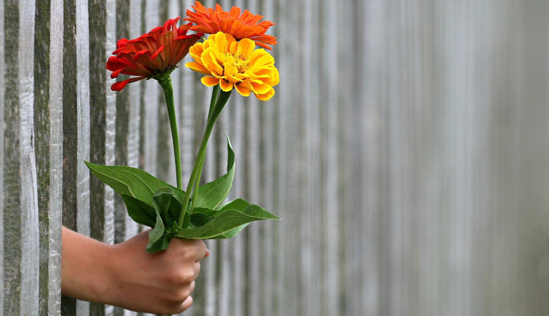 fence flowers hand-1549399_1920 pixabay crop