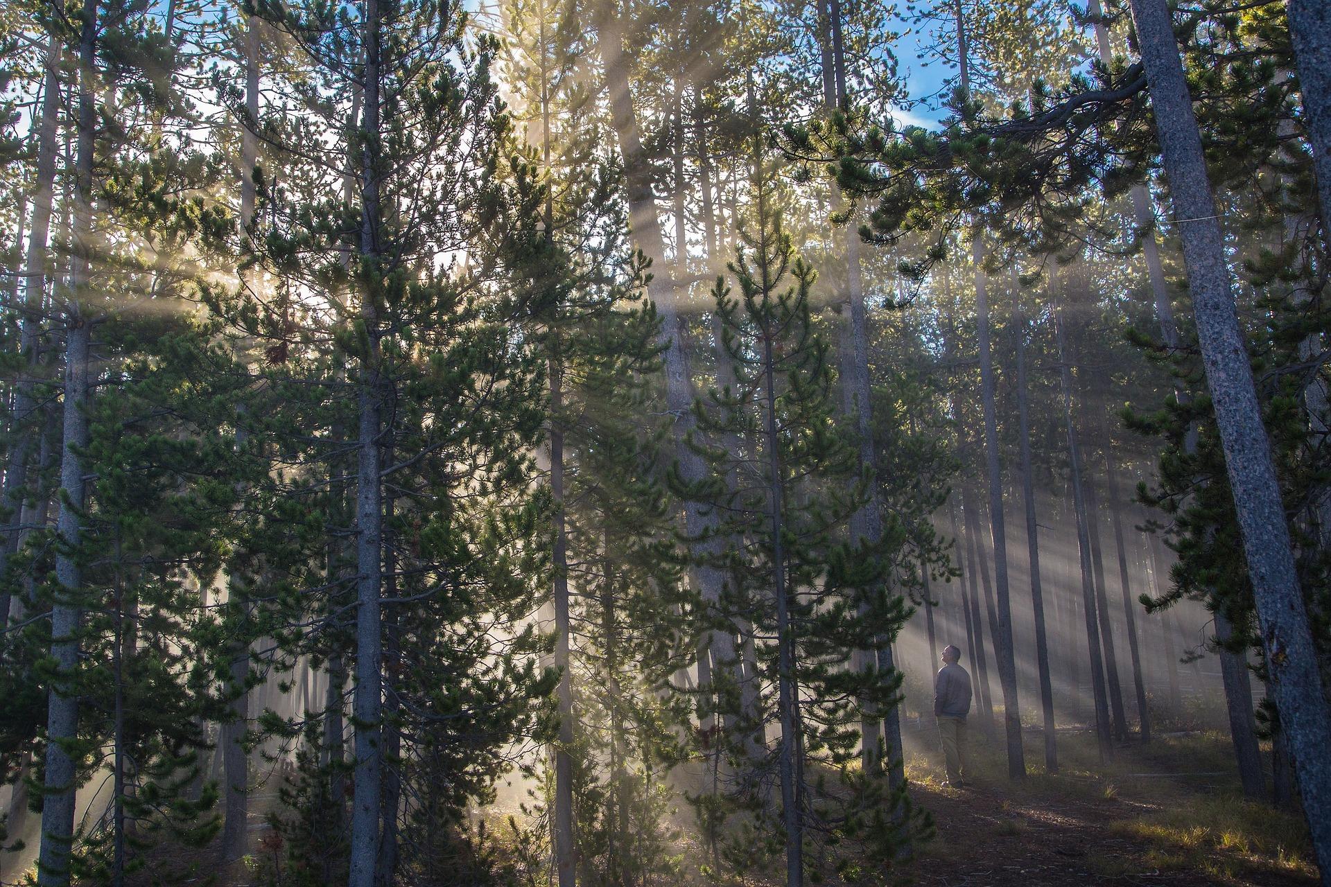 forest-1927500_1920.jpg