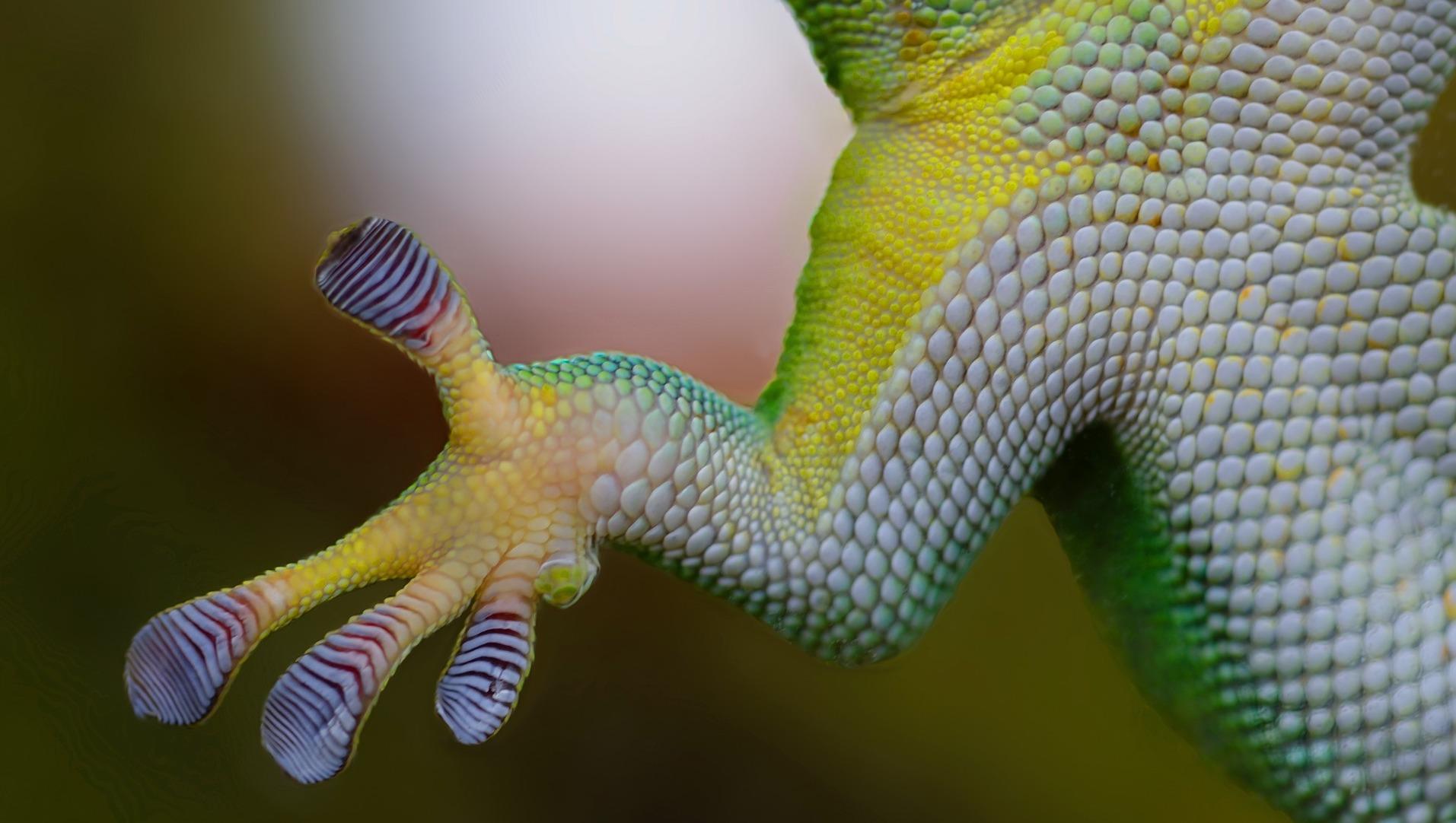 gecko-800887_1920pixabay crop