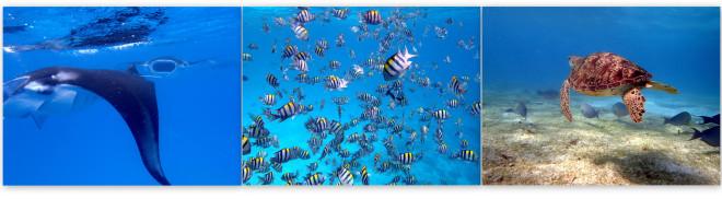Snorkelling in the Maldives © Cara Daneel & Jordan Parrett
