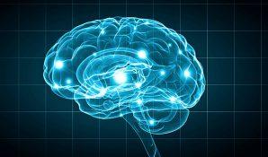 Brain/Psychology