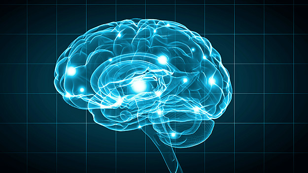 Brain Determinism and Free Will